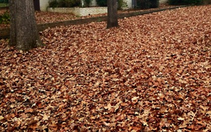 fall lawn care in billings
