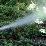 sprinkler blow out