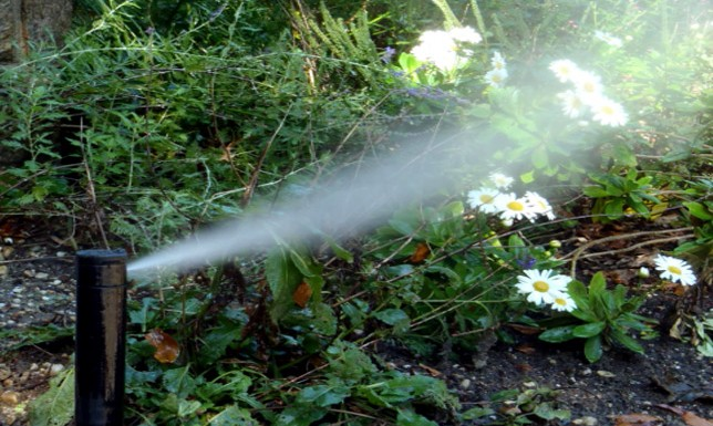 sprinkler blow out